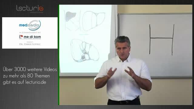 Anatomie: Leber, Galle, Pankreas - DocCheck TV