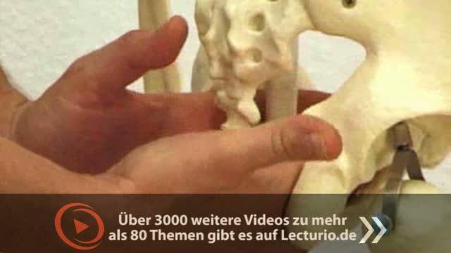 Prüfungsorientierte Anatomie: Beckenboden - DocCheck TV