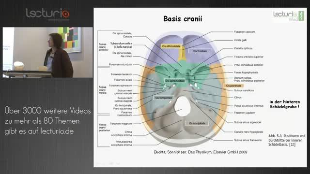 Fantastisch Anatomie Und Physiologie Des Schädel Bilder - Anatomie ...