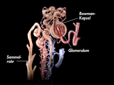 typhus abdominalis und paratyphus