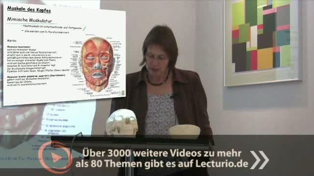 Anatomie: Muskeln von Kopf und Hals, Anatomie des Halses, Hirnnerven ...