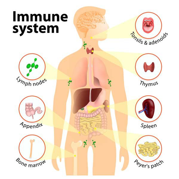 Immune Checkpoint Proteins