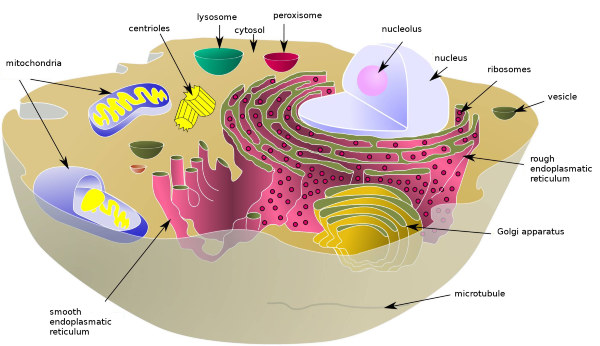 cell schematic