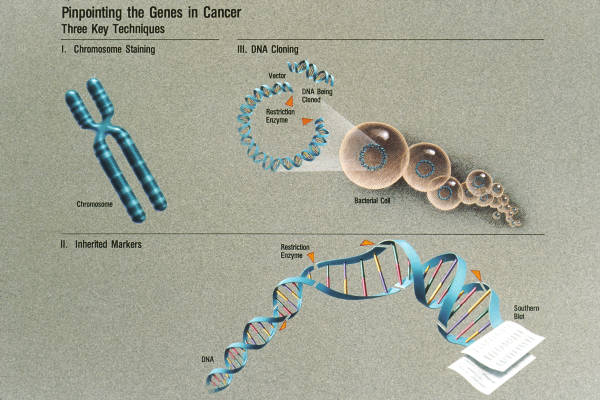 Pinpointing The Genes In Cancer: Three Key Techniques