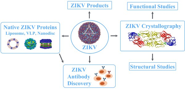 Discovery-Program-for-Zika-Virus-Targets-2
