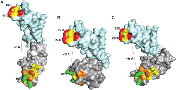 Epitope Mapping