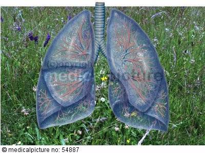 Allergic lung diseases