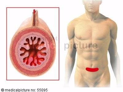 Small intestine: zones of referred pain