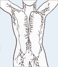 Lymphatic vessel system