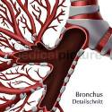 Bronchialsystem