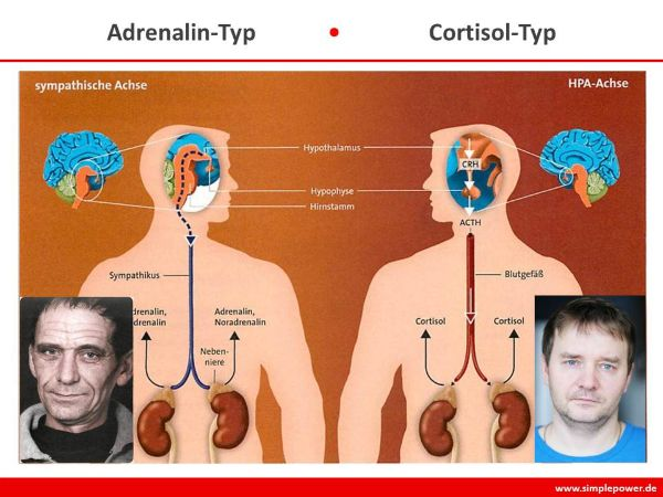 Neurostress - Adrenalin- und Cortisol-Typen