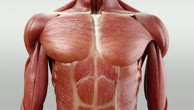 Musculi subcostales