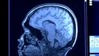 Was ist Neuroökonomie?