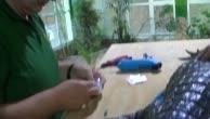 Granulom an der Fingerbeere eines Kaimans