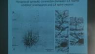Neuronale Mikroschaltkreise in einer kortikalen Säule