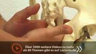 Prüfungsorientierte Anatomie: Beckenboden