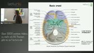 Anatomie: Schädel, Mund, Mundspeicheldrüsen