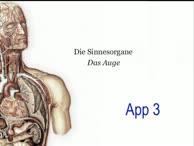 Repetitorium Sinnesorgane