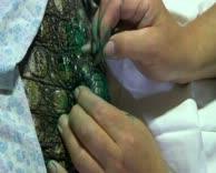 Untersuchungen Krokodil (2)