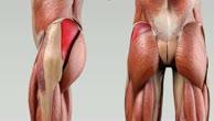 Musculus gluteus medius