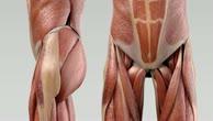 Musculus iliacus
