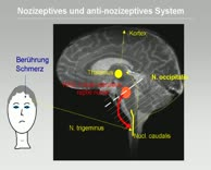Zaza Katsarava: ONS bei Cluster-Kopfschmerz