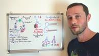 Die Alveolen und das Surfactant bei der Beatmung