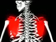 Anatomie Bewegungsapparat