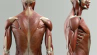 Musculi spinales