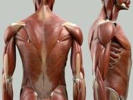 Musculi rotatores