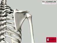 Anatomie des Humerus von dorsal