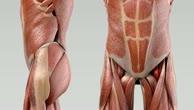 Musculus iliopsoas