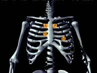 Medizin Crashkurs - Herzkreislauf
