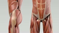 Musculus psoas minor