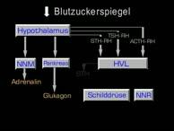 Biologische Regelkreise