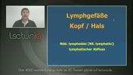 Anatomie Repetitorium - Lymphgefäße im Kopf-Hals-Bereich