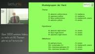 Anatomie Bewegungsapparat: Hand