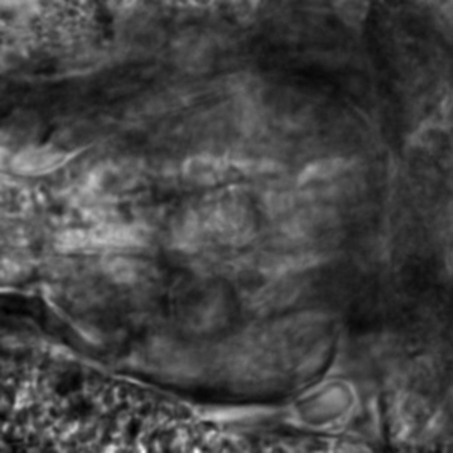 Caenorhabditis elegans - CIL:2833