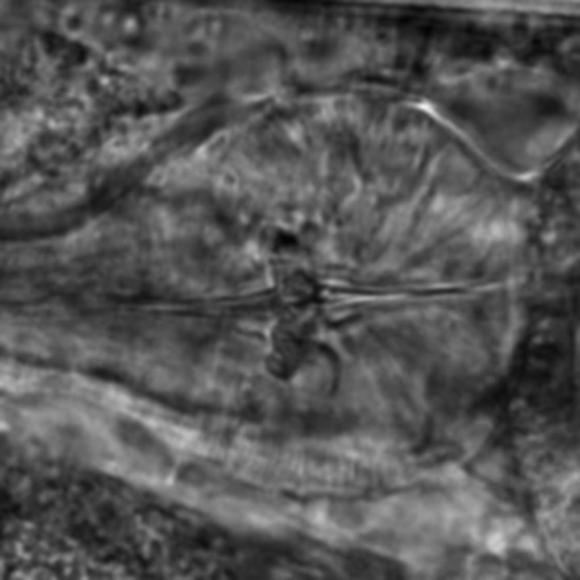 Caenorhabditis elegans - CIL:2183