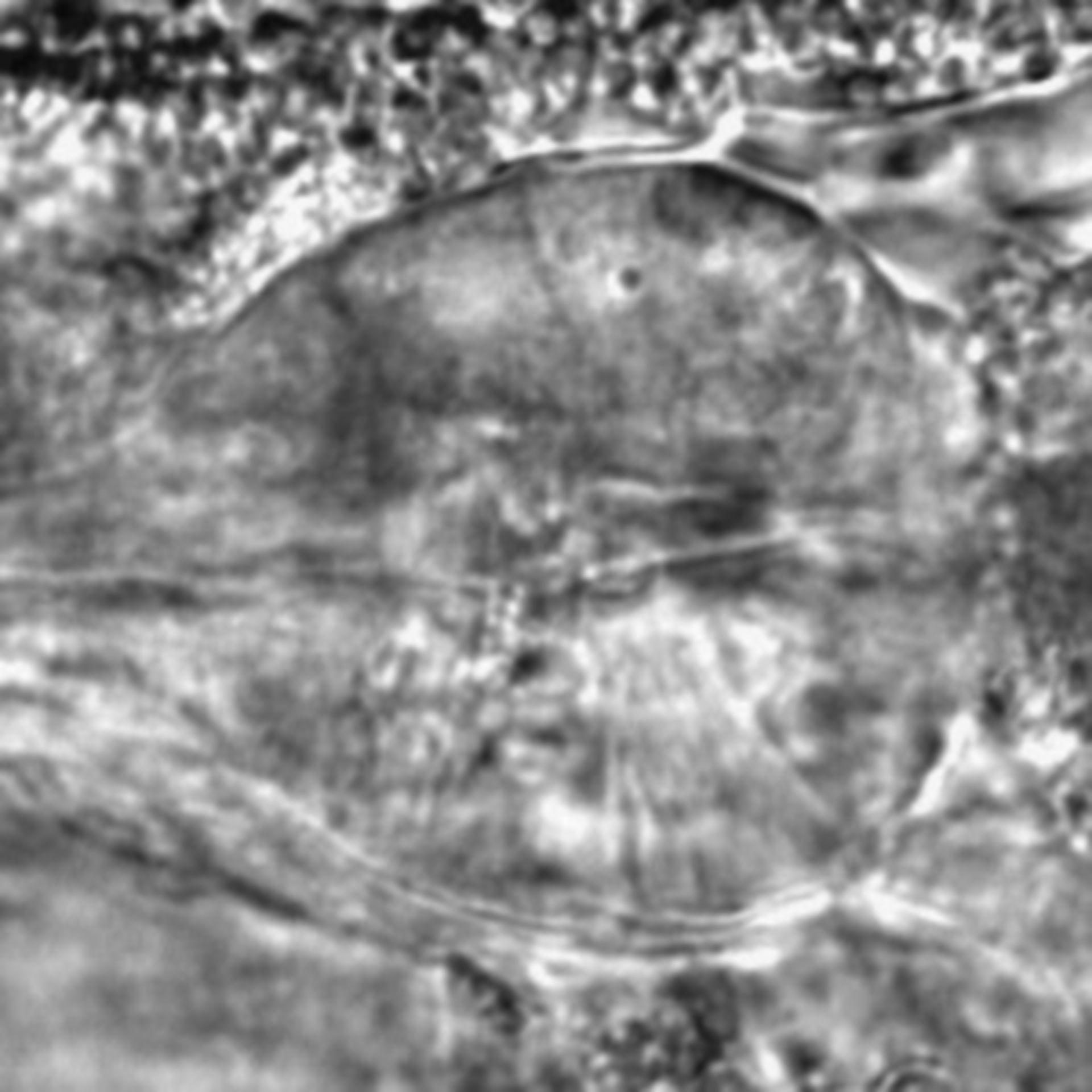 Caenorhabditis elegans - CIL:1973