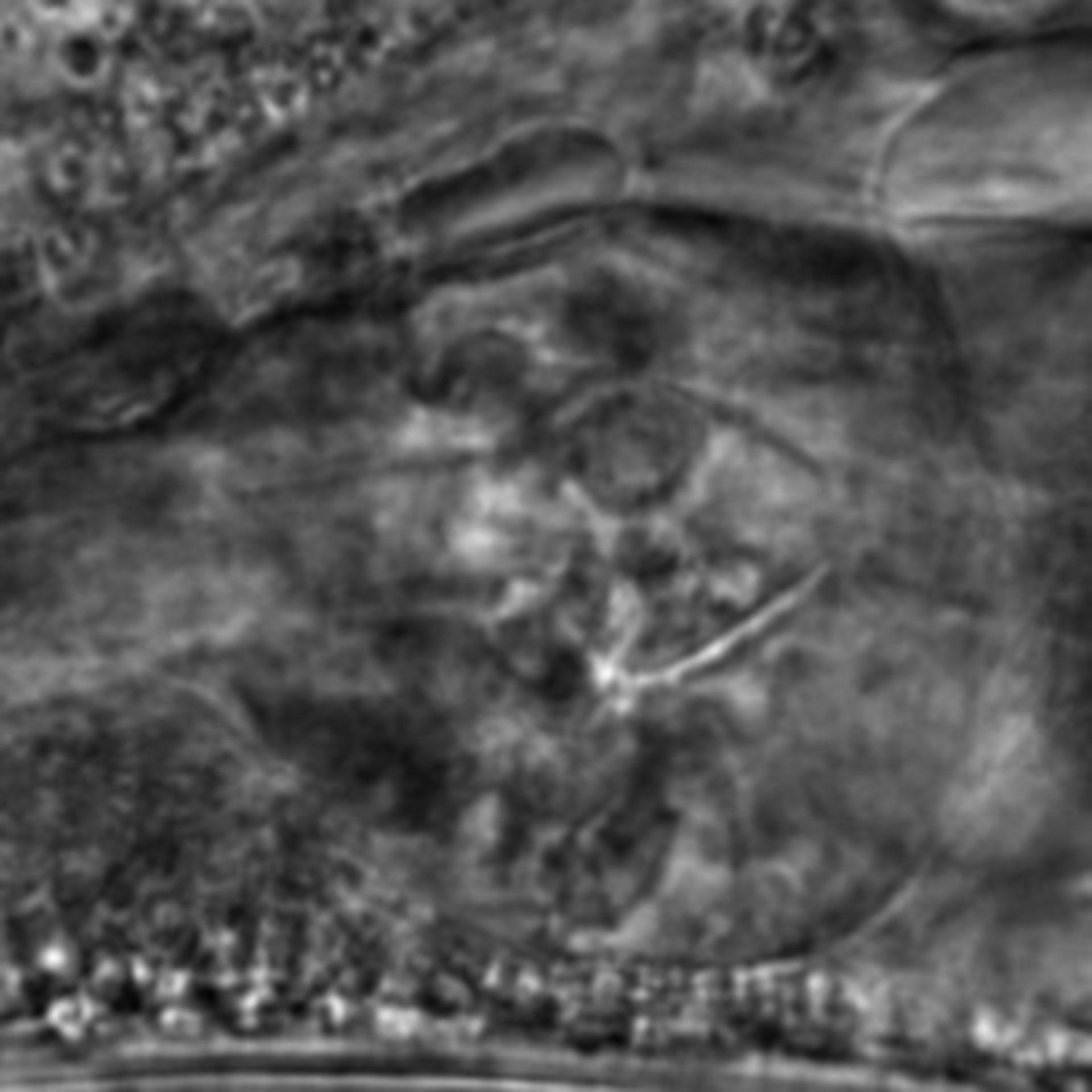 Caenorhabditis elegans - CIL:2734