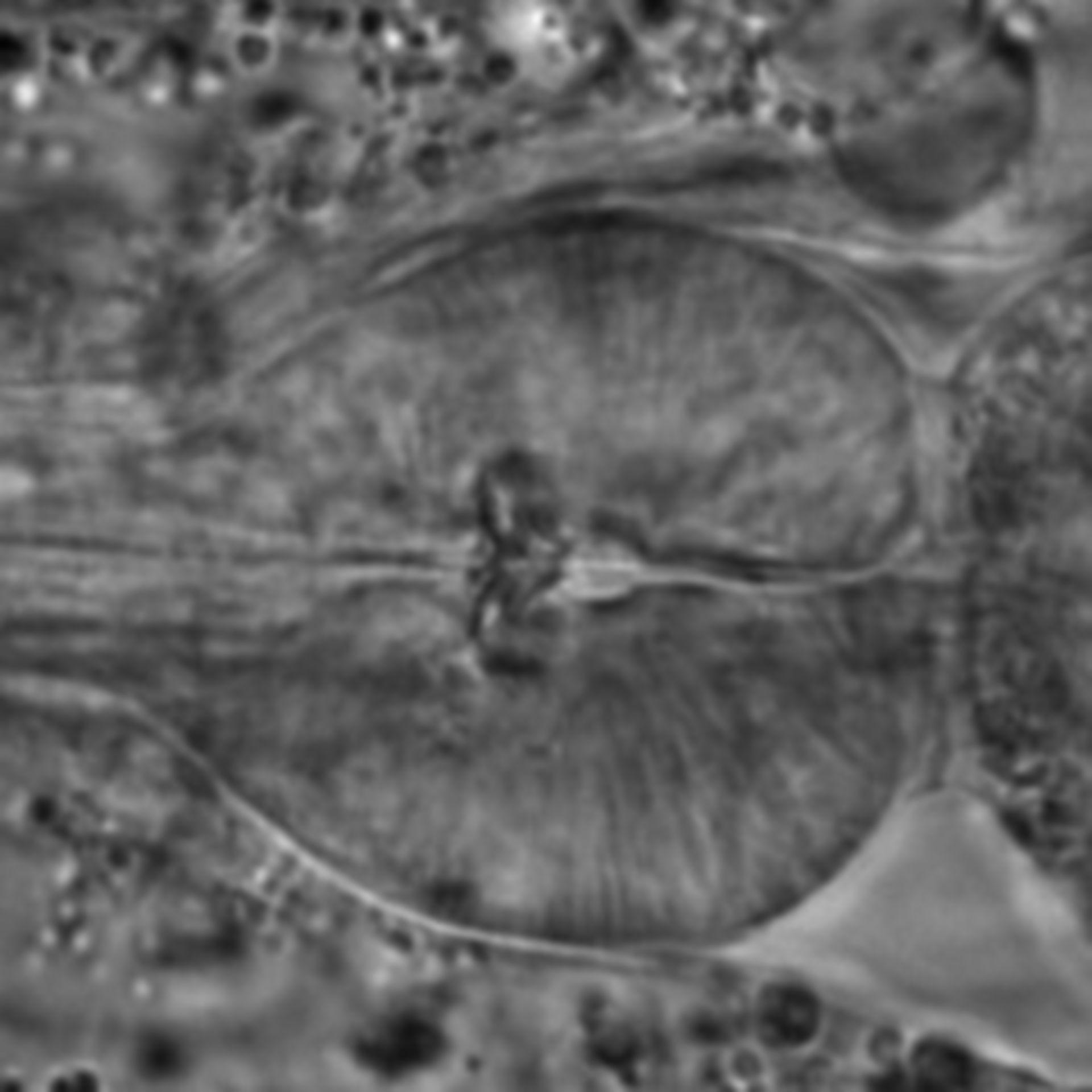 Caenorhabditis elegans - CIL:1712