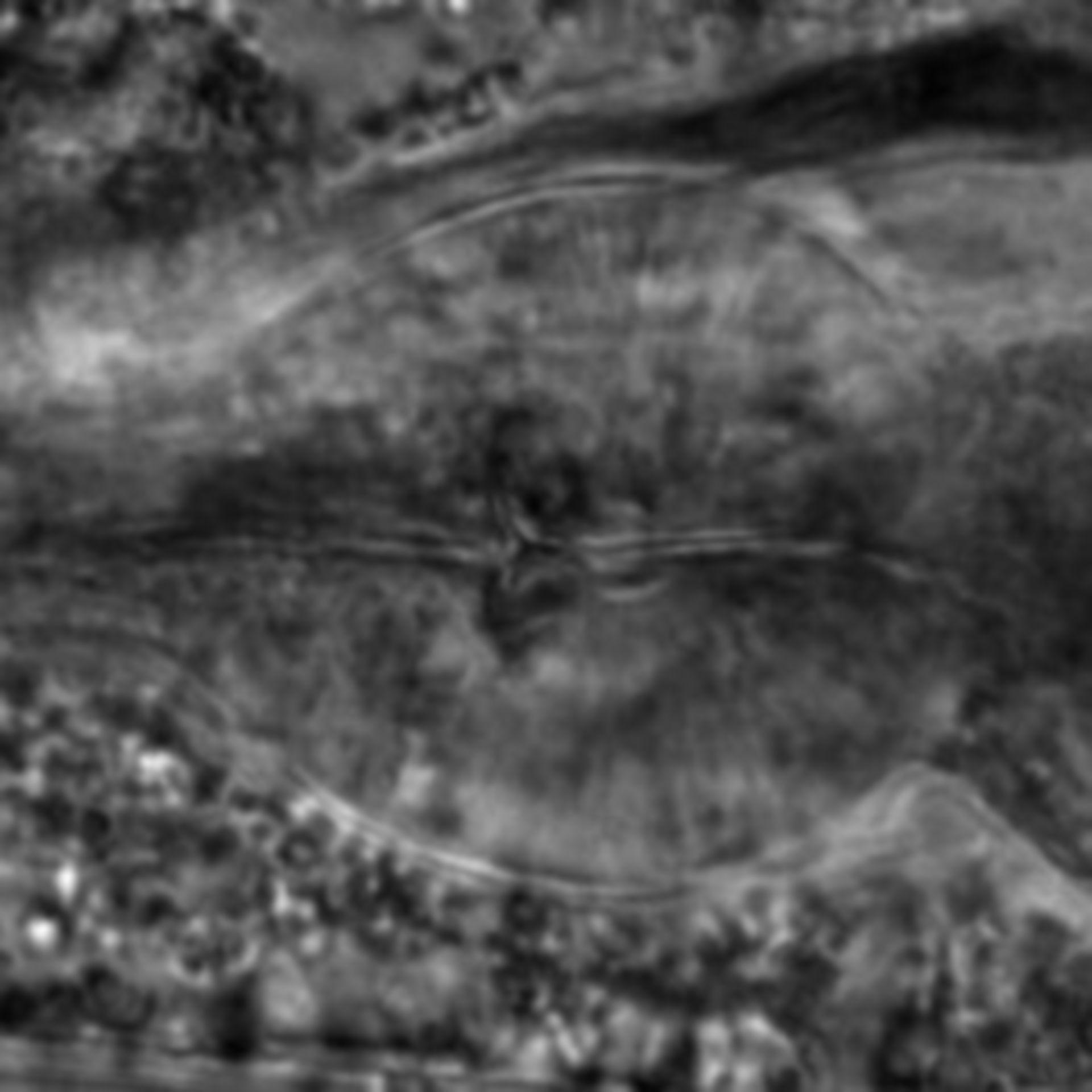 Caenorhabditis elegans - CIL:2284