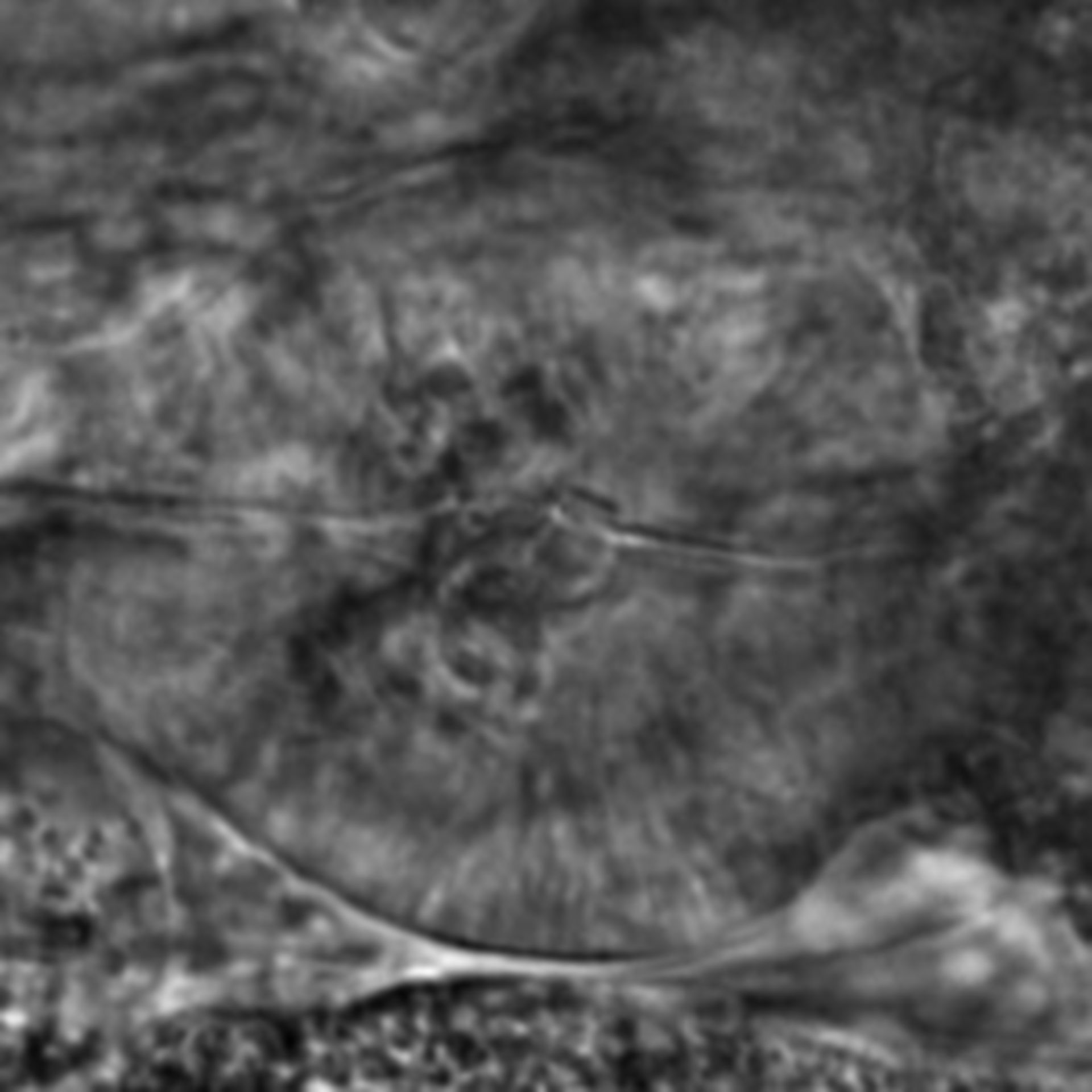 Caenorhabditis elegans - CIL:1948