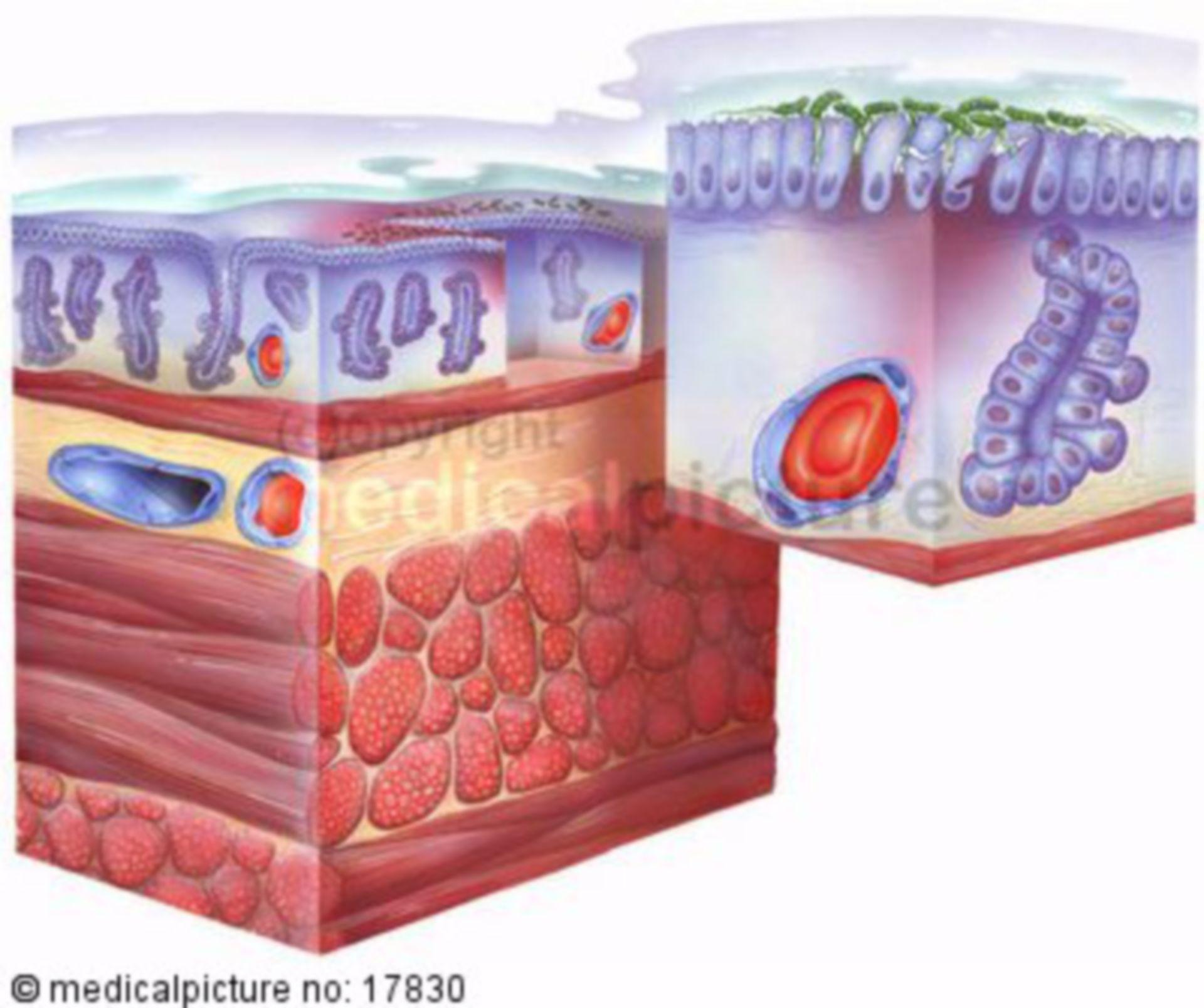 Mucosa membrana dello stomaco