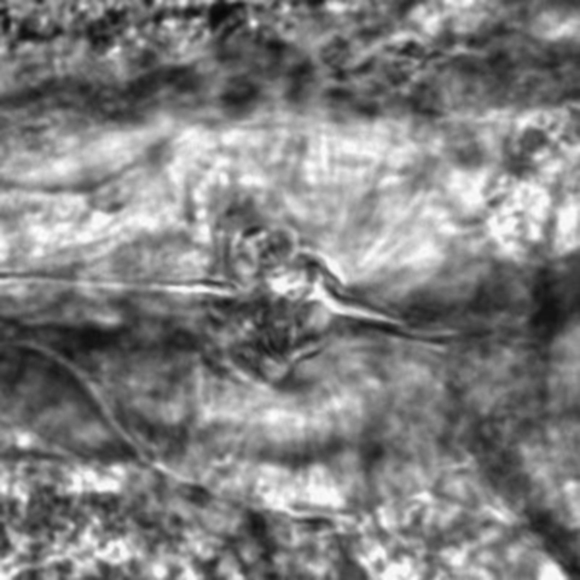 Caenorhabditis elegans - CIL:2209