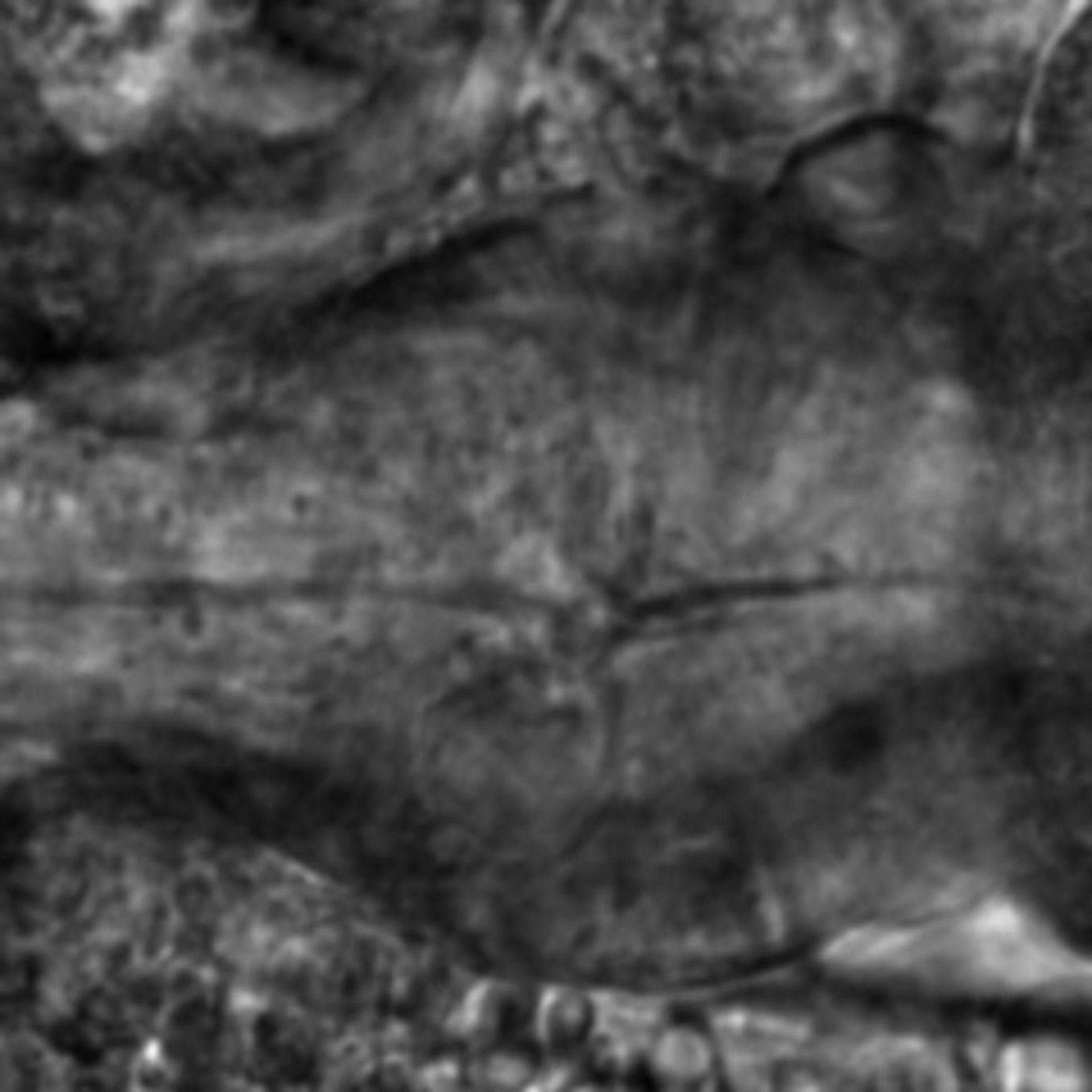 Caenorhabditis elegans - CIL:2140