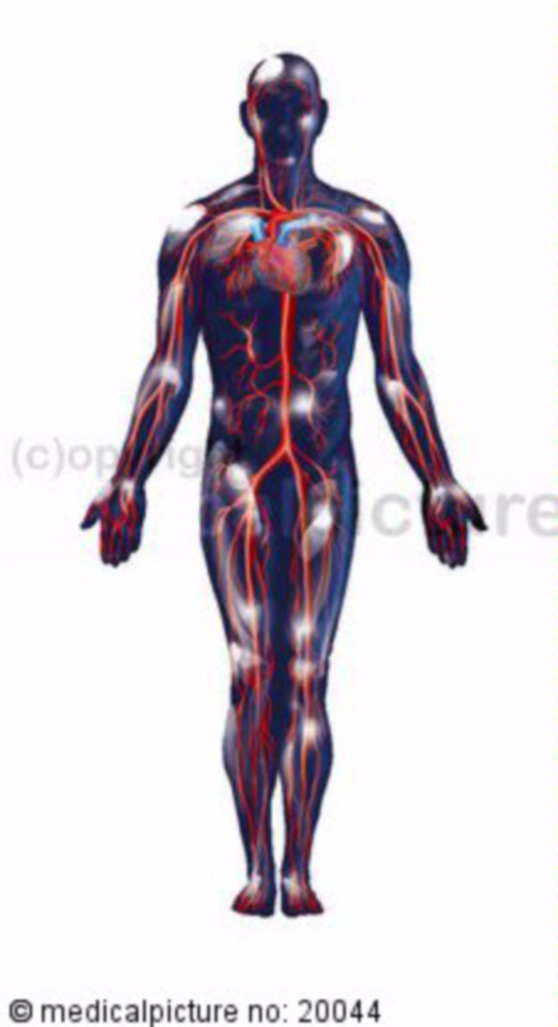 Menschlicher Blutkreislauf
