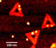 DNA-Dreiecke im Rasterkraftmikroskop. Die hell leuchtenden Punkte sind Goldpartikel, die paarweise angeordnet sind. In der Lücke zwischen ihnen lassen sich einzelne Moleküle einfangen und nachweisen. © HZDR
