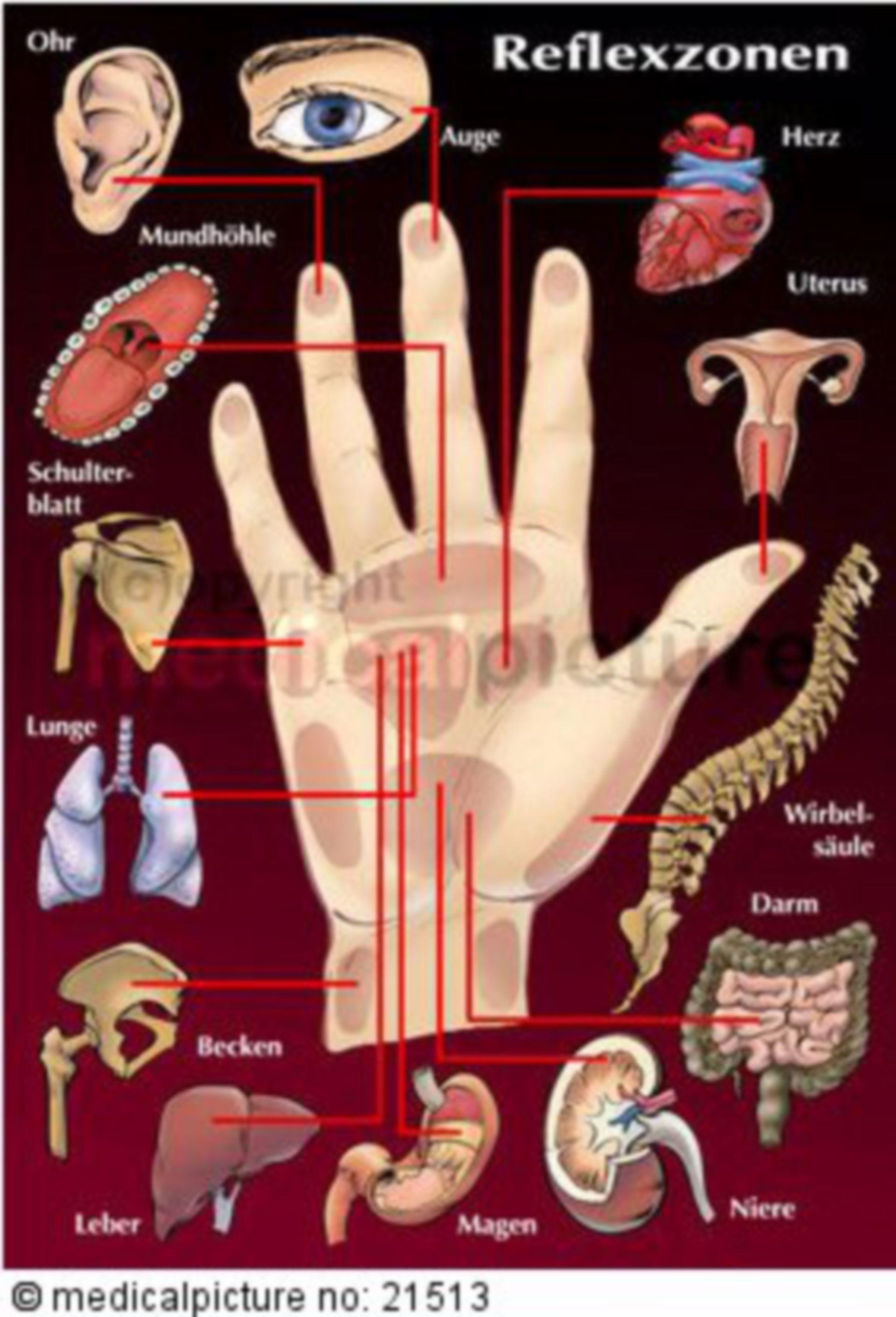Hand reflexology zones